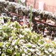 積雪なるか