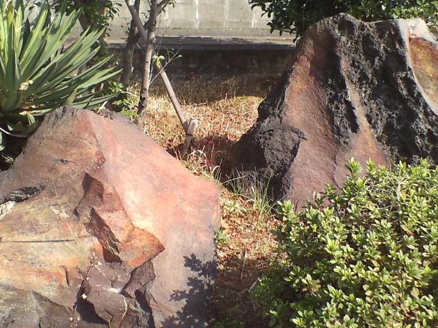 桜島の溶岩