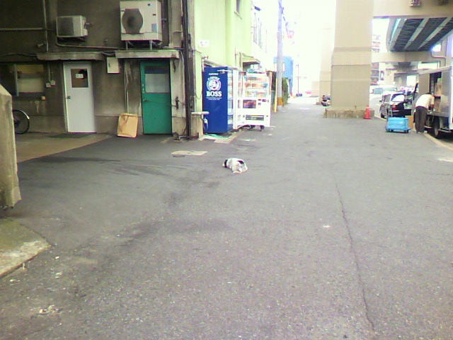 ねそべり犬